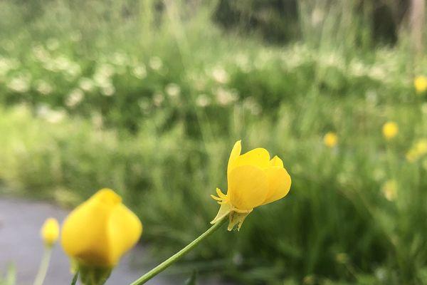 Cachez ces fleurs que l'on ne saurait voir !