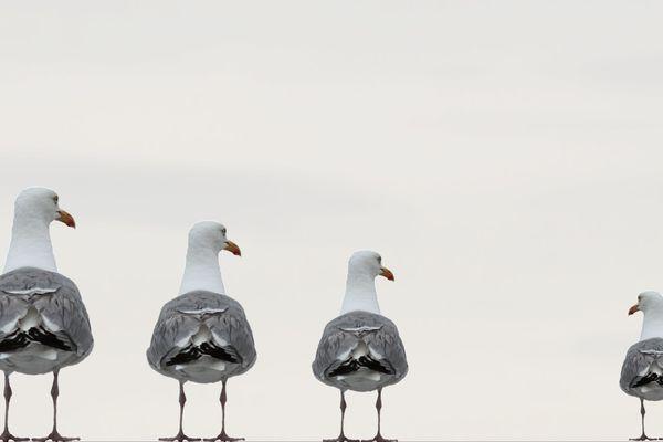 L'écluse du bassin Loubet sera prochainement équipée d'effarouchement de goélands