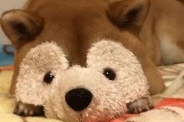 Un chien déguisé en souris (sur Twitter).
