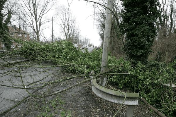 Photo archive : un arbre tombe près de Loos lez Lille le 18 janvier 2007 en raison de vents violents.