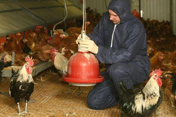 Sept communes ont été placées en zone de surveillance par la préfecture du Nord. Les oiseaux et volailles doivent être confinés.