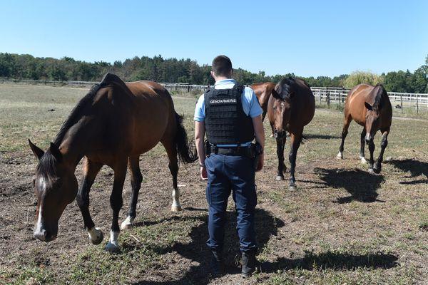 En raison de la multiplication des agressions d'équidés cet été, les gendarmes renforcent les patrouilles près des élevages de chevaux partout en France (ici une patrouille dans la Loire le 4 septembre, photo d'illustration).