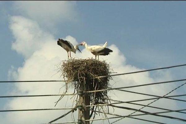 Un pylone d'ERDF : le logis apprécié des cigognes de Brebotte
