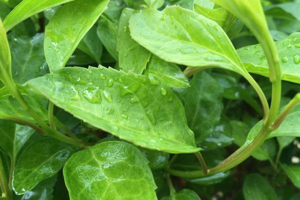 Dans la matinée du samedi 11 mai, un vigneron a relevé 20 mm de précipitations dans la petite montagne de Reims