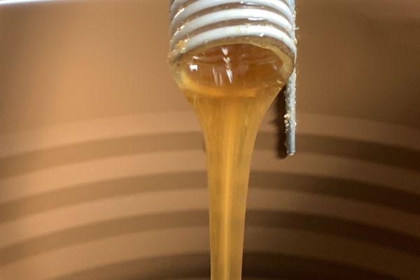 Le miel extrait s'écoule lentement