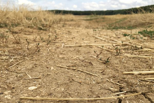 La sécheresse a profondément impacté la Lorraine pendant l'année 2019.