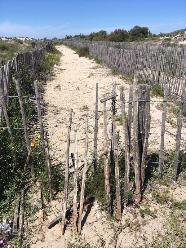Il ne subsiste rien de la RD 59 : l'ancienne route qui longeait les plages du Petit et Grand Travers, entre Carnon et la Grande Motte, a été détruite pour permettre à la dune d'évoluer plus naturellement.