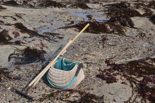 La pêche à pied de loisir interdite sur le littoral atlantique