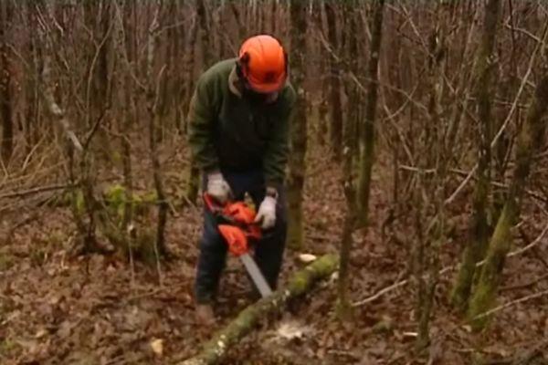 Les affouagistes participent à l'entretien de la forêt, et se fournissent en bois de chauffage à moindre coût
