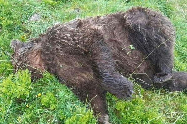L'ours a été retrouvé mardi 9 juin sur la commune d'Ustou
