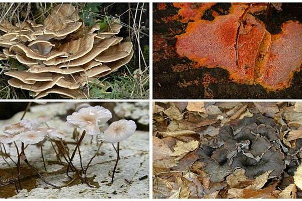 De nombreux champignons des bois et forêts sont utilisés dans le retraitement écologique des déchets, l'industrie pharmaceutique...