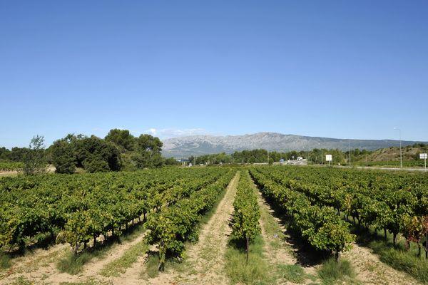 Les vignes provençales vont pouvoir s'agrandir en 2016.