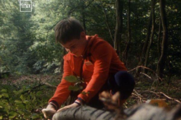 Quand, où, comment ramasser les champignons ? Les conseils seventies pour faire panier plein