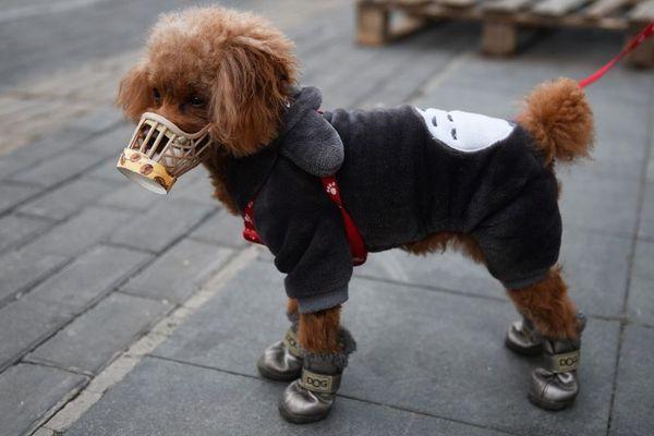 Avec le nombre de cas contaminés au COVID-19 qui augmente en France, une question se pose : peut-on contaminer nos animaux ?