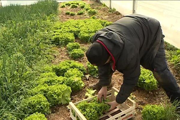 Agriculteur dans la  plaine du Var