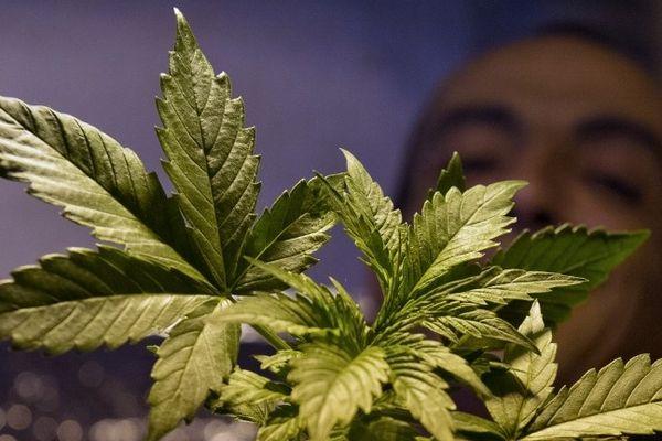 Dominque Broc, porte-parole des cannabis social clubs en France