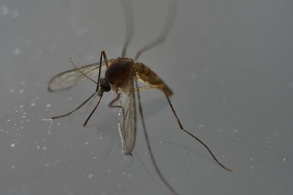 Le moustique implanté désormais dans la moitié des départements, avril 2019