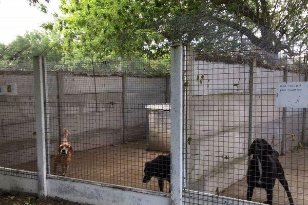 Le refuge des Amis des Bêtes de Royan a reçu pour près de 200 000 euros de legs.