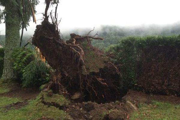 Dans les environs de Thiézac (15), les vents ont été si violents que certains arbres n'ont pas résisté.