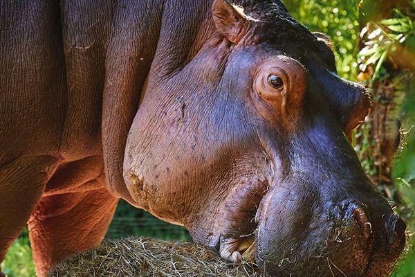 Babeth est morte à l'âge de 31 ans au zoo de La Flèche en Sarthe, le 16 décembre 2019