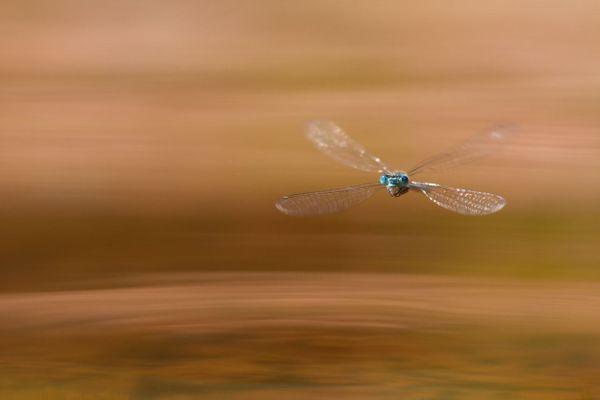 La libellule, une photo primée d'Alain Fournier