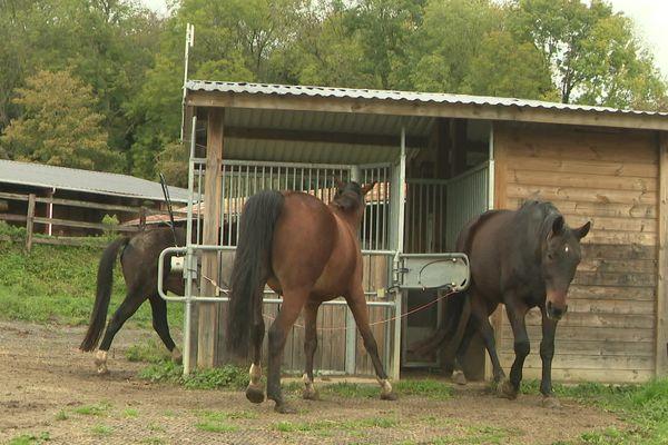 Un self-service pour chevaux où tout le monde fait la queue dans le calme
