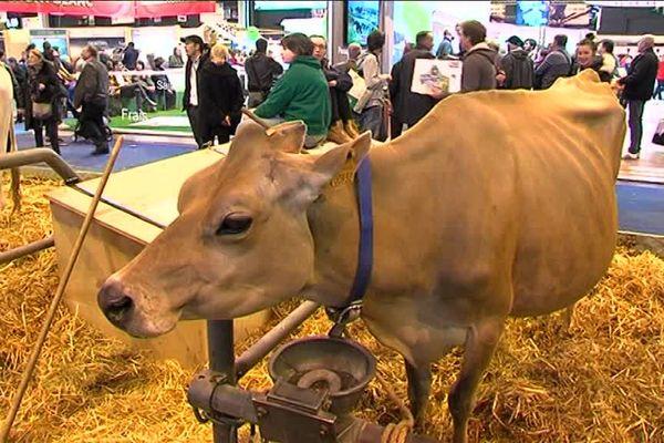 Ella a gagné le concours général cette année dans la catégorie des vaches Jersiaises