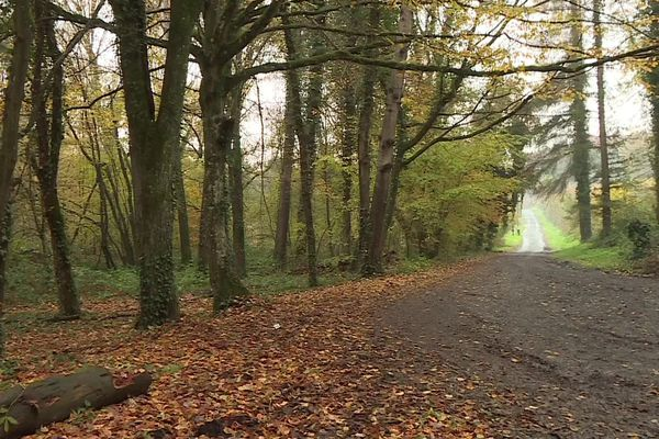 La forêt de Retz dans l'Aisne où le corps d'une femme de 29 ans a été retrouvé samedi 16 novembre 2019