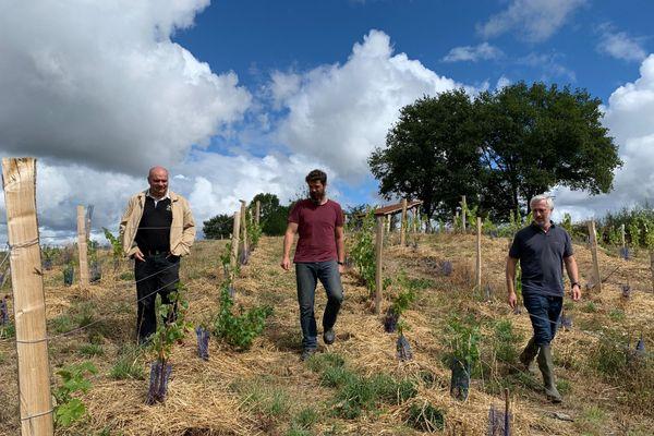 Le retour de la vigne en Creuse, l'une des conséquences du changement climatique