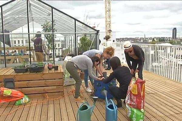 Des habitants expérimentent l'agriculture urbaine sur le toit de leur immeuble