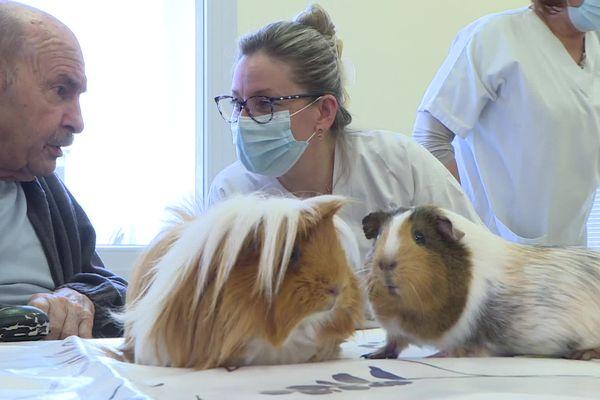 Avec ses cochons d'inde, ses lapins et son chien, Emilie Hienne, médiatrice animale rend visite aux résidents d'un Ehpad de Dole
