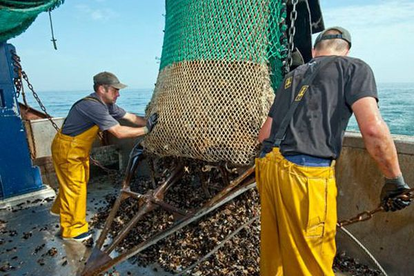 Une image du passé: entre 2000 à 5000 tonnes de moule de Barfleur pêchées par an en Normandie ( Archives)