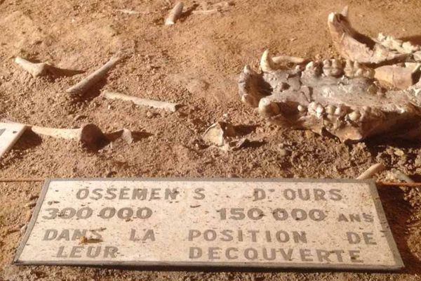 Des ossements d'ours dans la grotte d'Azé en Saône-et-Loire