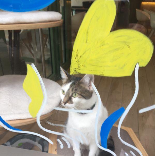 Une nouvelle cagnotte vient d'être lancée pour le Ronron Café.