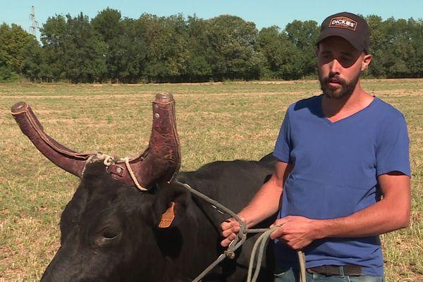 Le Cailar (Gard) - Benjamin et son taureau Banbino, après le périple dans le cabriolet - 7 juillet 2020.