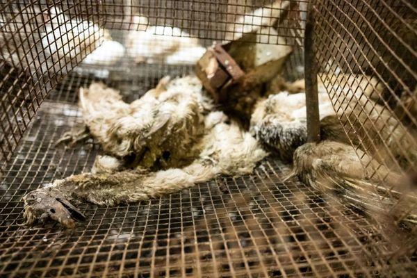 L214 a photographié ces canards morts dans l'élevage de Lichos, il y a quelques jours (août 2020)