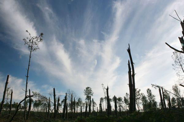 Photo d'archives : un an après le passage de la tempête Klaus, la forêt dévastée à Ygos-Saint-Saturnin, le 8 janvier 2010.