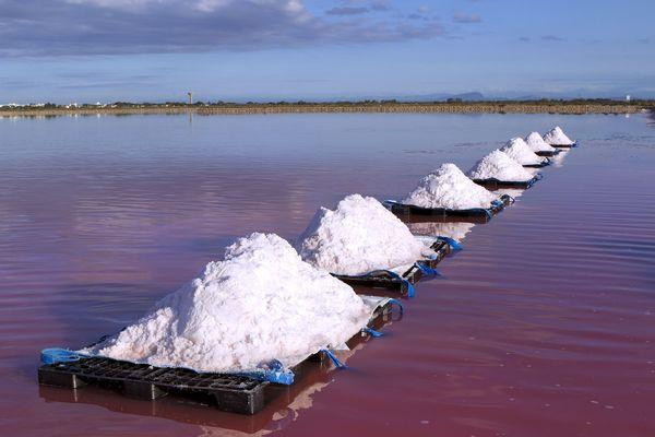 En Camargue, la fleur de sel est récoltée à la main de la mi-juillet à la fin août.