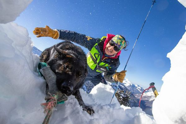 Un chien d'avalanche à l'entraînement - Photo d'illustration