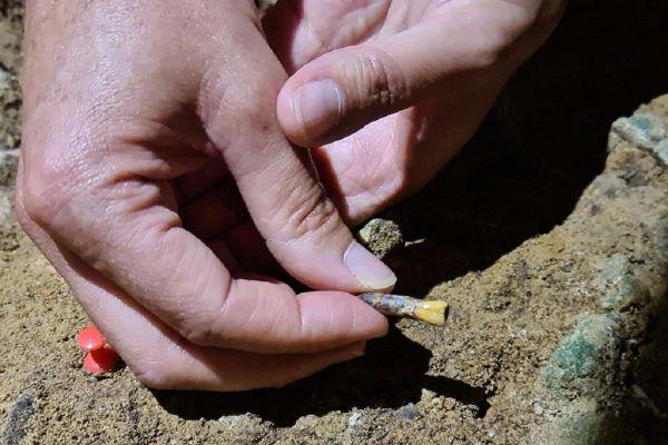 La dent de 70 000 ans découverte sur le site de Montmaurin.