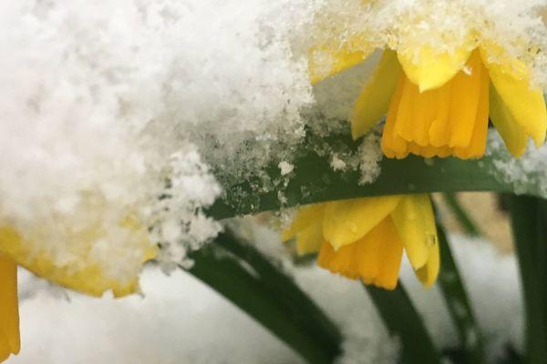 Le printemps... Bientôt !