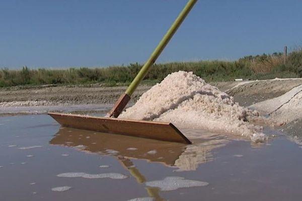 La récolte du sel a commencé en avance cette année dans l'île de Ré.