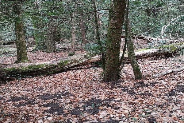 D'importantes chutes d'arbres ont condamné l'accès à la forêt.
