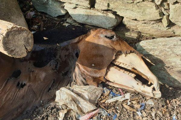 Des images insoutenables qui en disent long sur le calvaire subi par les chevaux