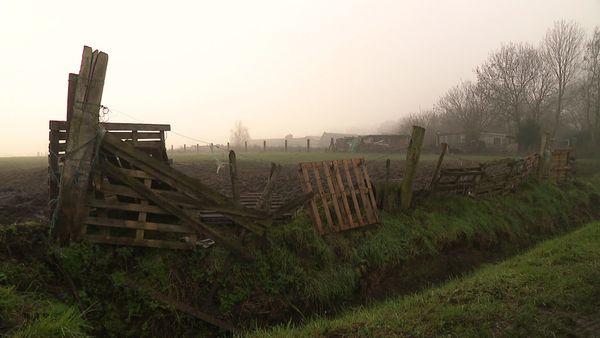 Les clôtures de la pâture sont faites de palettes, faute de moyens.
