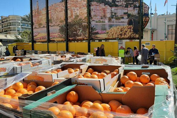 Le défruitage et la vente d'agrumes, samedi 7 mars, à Menton.