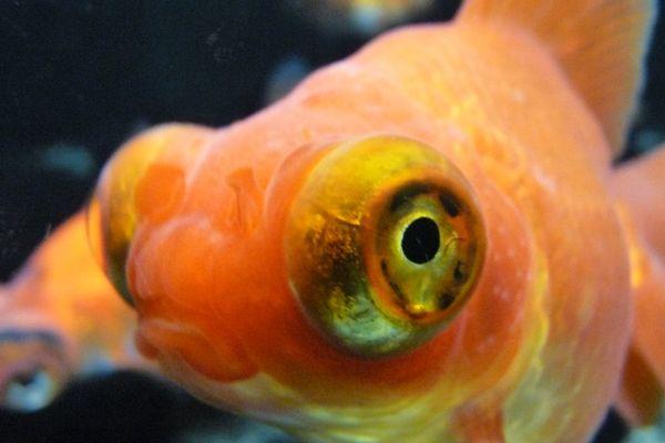 'Moi, je suis plutôt contre la carte de pêche' semblerait dire ce poisson