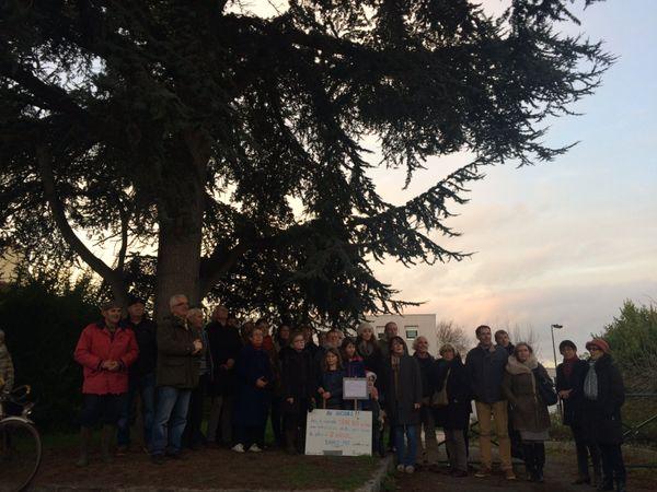Une trentaine de personne du collectif contre l'abattage du cèdre a manifesté
