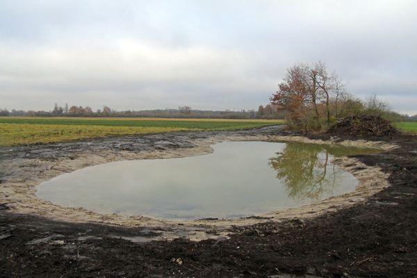 Une mare réalisée à Bischoffsheim pour les vanneaux huppés notamment