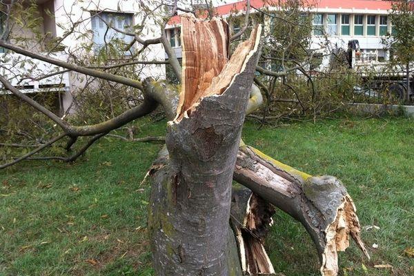 Certains arbres n'ont pas résisté à Toulouse